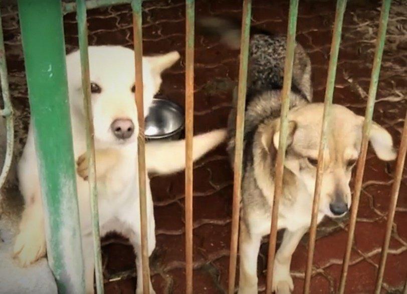 na zdjęciu psy ze schroniska