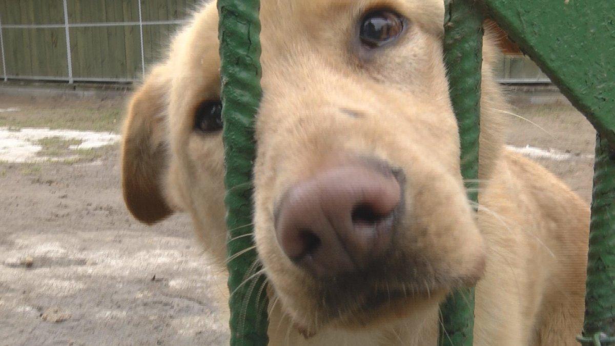 Na zdjęciu pies ze schroniska dla zwierząt REKSIO