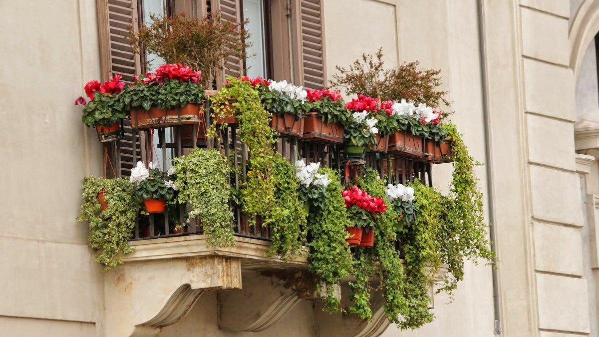 na zdjęciu: balkon z kwiatami