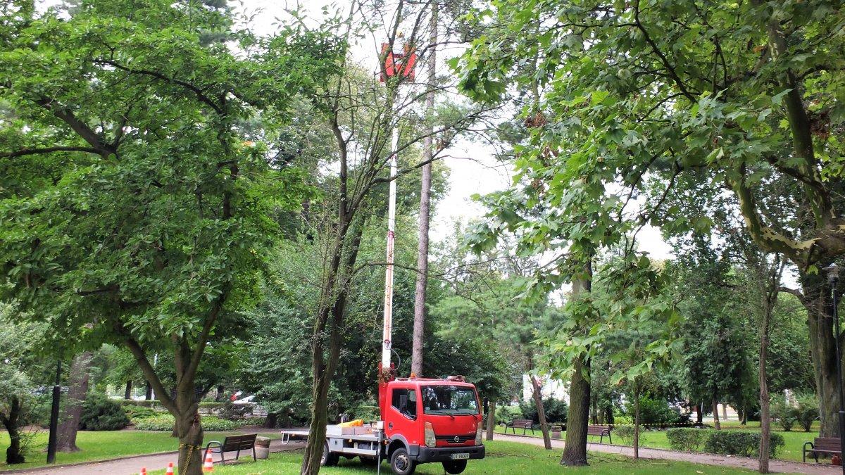 Pielęgnacja drzewostanu w parku Chopina