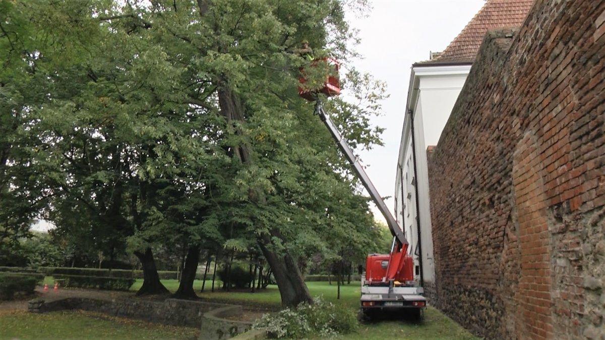 Na zdjęciu pielęgnacja drzew w parku Chopina w Brodnicy