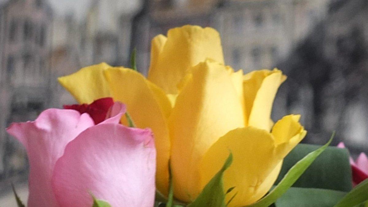 Na zdjęciu bukiet tulipanów