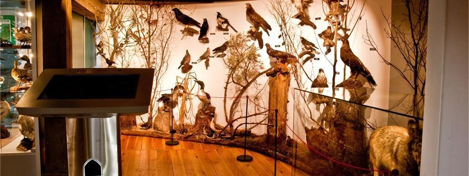 Zapraszamy na Dzień Dziecka do brodnickiego Muzeum